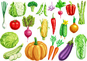 Vegetable watercolor set. Fresh tomato, carrot, pepper, cabbage, onion, radish, broccoli, green onion, cucumber, zucchini, eggplant, pumpkin, corn, pea, garlic, asparagus, cauliflower veggies design