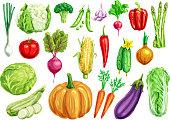 Vegetable watercolor set. Fresh tomato, carrot, pepper, cabbage, onion, radish, broccoli, green onion, cucumber, zucchini, eggplant, pumpkin, corn, pea, garlic, asparagus, cauliflower veggies design