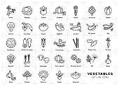 Vegetables icon isolated, Spices . Trendy thin line art style. Fresh vegetarian food, vegetable garden tomato, salad, carrot, pepper, pumpkin, pea, onion dill parsley and etc Vector