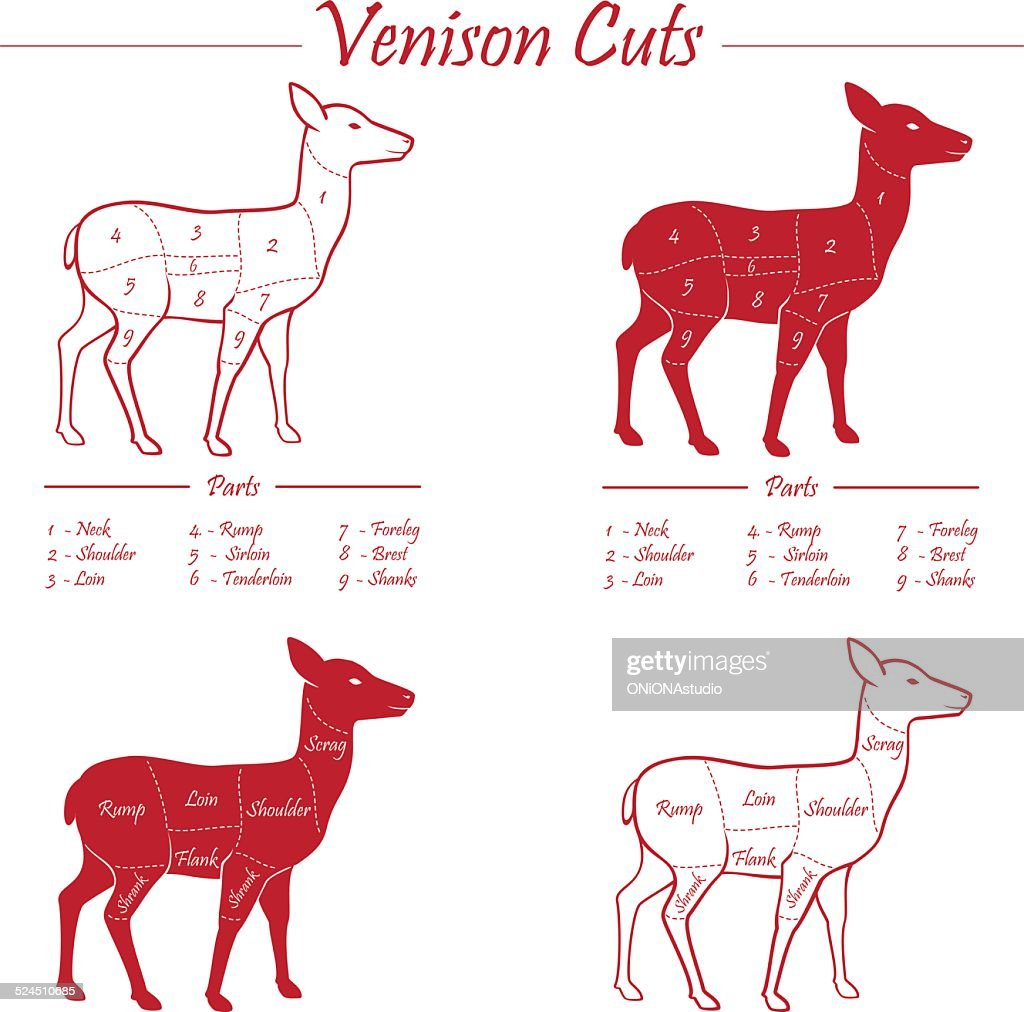 venison meat cut diagram scheme vector art thinkstock rh thinkstockphotos com Butcher Cuts of Venison Cuts of Venison Chart