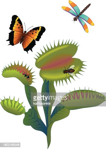 Venus Fly Trap And Insects Vector Art | Getty Images