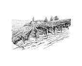 Vineyard landscape vector sketch design. Hand drawn illustration