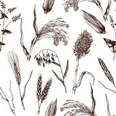 Vector seamless pattern with hand drawn cereal crops sketches.  Farm fresh and locally grown organic products illustration.