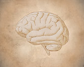 Engraving brain side view with soft drawing illustration on sepia old paper background