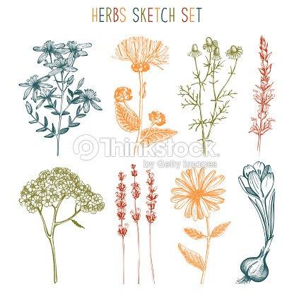 Vintage Coleccion De Ilustraciones De Flores De Hierbas Arte
