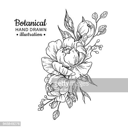 Vintage flower bouquet. Vector drawing. Peony, rose, leaves and berry sketch. : arte vettoriale