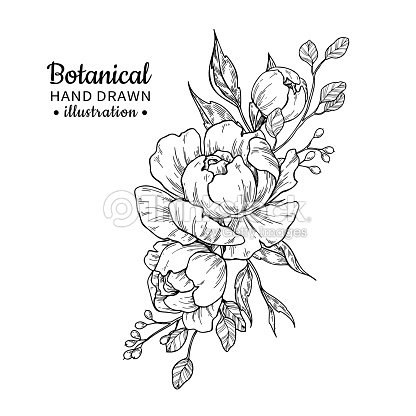 Vintage flower bouquet. Vector drawing. Peony, rose, leaves and berry sketch. : stock vector
