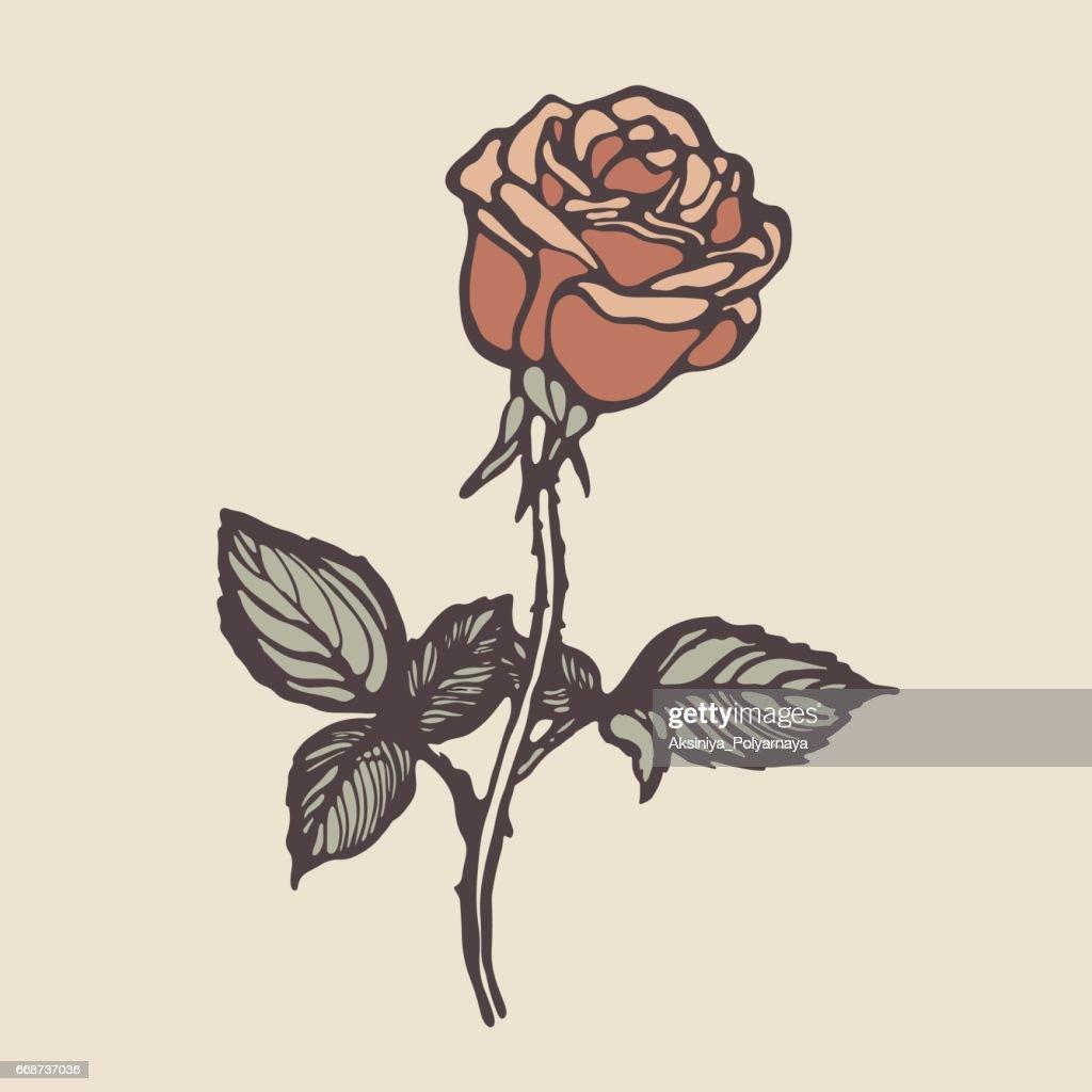 Vintage Hand Drawn Rose Vector Art Thinkstock