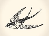 Vintage vector illustration of flying swallow over white background