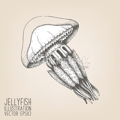 Vintage jellyfish illustration - photo#41