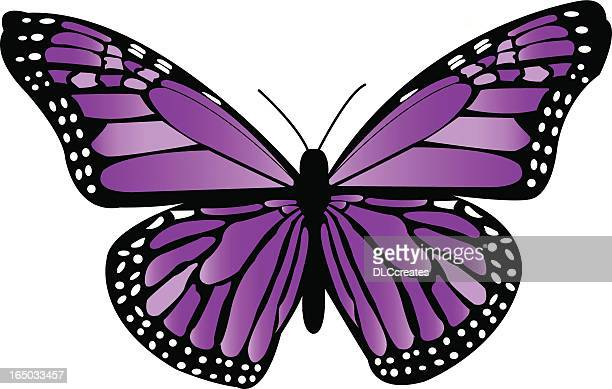 Violet Monarchfalter