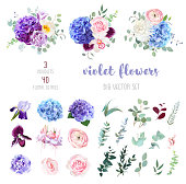 Violet, purple and blue hydrangea, pink rose and ranunculus, white chrysanthemum, carnation, plum orchid, iris, fuchsia, bell flowers, eucalyptus, and mix of greenery big vector collection