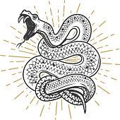 Viper snake illustration on white background. Design element for poster, emblem, sign. Vector illustration