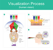Visualization Process is the ability to interpret the surrounding environment using light in the visible spectrum reflected the objects in the environment by human brain.