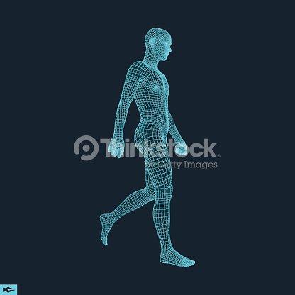 Caminando El Hombre 3d Cuerpo Humano Modelo Arte vectorial | Thinkstock