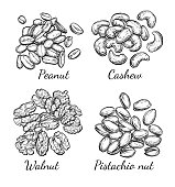 Nuts collection. Ink sketch set. Hand drawn vector illustration. Isolated on white background. Retro style.