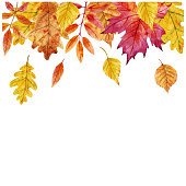 Beautiful vector frame with watercolor hand drawn autumn leaves on transparent background