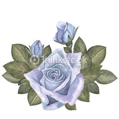 Rosas Azules De Acuarela Sale Ramo De Flores Arte Vectorial Thinkstock