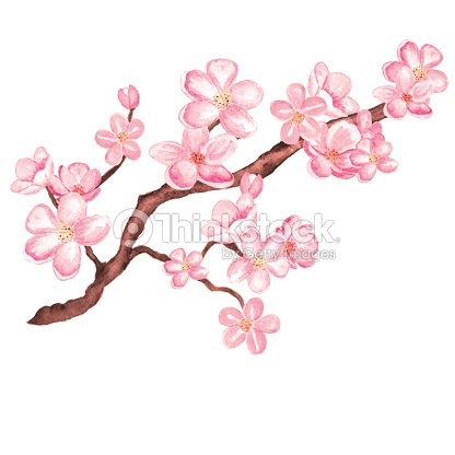 Watercolor Rama Del árbol De Cerezo En Flor De Sakura Con Flores ...