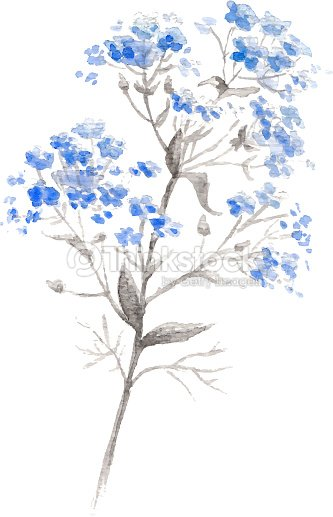 Watercolor Branch Of Blue Forget Me Flower Vector Art