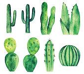 Watercolor cactus vector clip art. Green botanical clipart