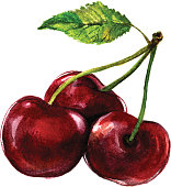 Delicious Watercolor Cherry isolated on white background. Vector Illustraction