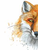 Watercolor drawing of a portrait of an animal mammal of a red fox, wild fox, printshop, pattern on a white background