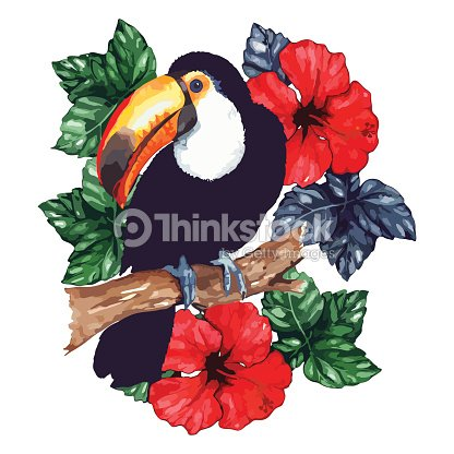 Watercolor exotic tropical animal bird toucan flower hibiscus isolated vector