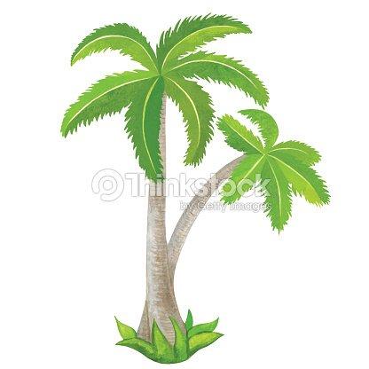 Aquarelle des palmiers de noix de coco verte clipart vectoriel thinkstock - Palmier clipart ...