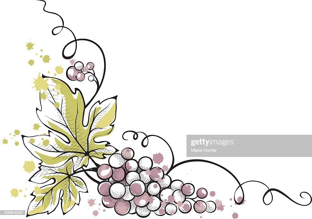 Watercolor ilustración, ramo de uvas : Arte vectorial
