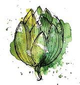 Watercolor illustration of artichoke. High quality EPS.