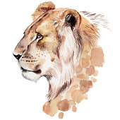 Watercolor lion portrait. Hand drawn animal illustration, isolated on white background.