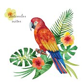 Watercolor parrot, exotic flowers and leaves isolated on white background, vector illustration.