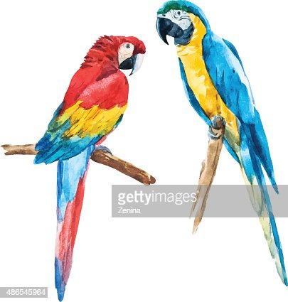 Watercolor parrot : stock vector