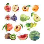 watercolor set of fruits vector