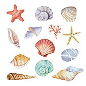 Watercolor set of seashells on white background for your menu or design, vector illustration.