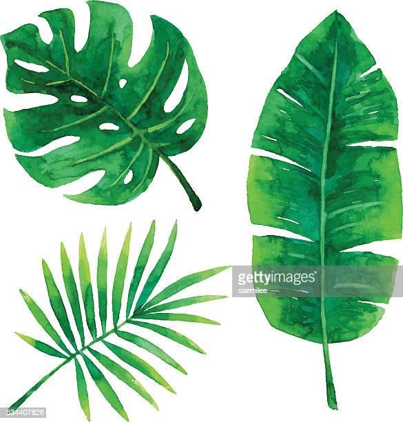 Acuarela hojas Tropical