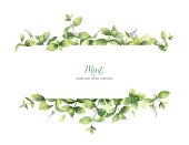 Watercolor vector banner of mint branches isolated on white background. Floral illustration for design greeting cards, wedding invitations, natural cosmetics, packaging and tea.