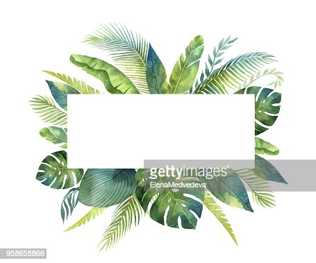 Watercolor vector banner tropical leaves and branches isolated on white background. : stock vector