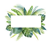 Watercolor vector banner tropical leaves and branches isolated on white background. Illustration for design wedding invitations, greeting cards, postcards. Summer flowers with space for your text.