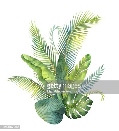 Watercolor vector bouquet tropical leaves and branches isolated on white background. : stock vector