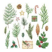 Watercolor vector Christmas set with evergreen coniferous tree branches, berries and leaves. Illustration for your holiday design isolated on a white background.