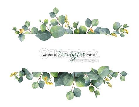 Bandera floral acuarela vector verde con hojas de eucalipto dólar de plata y ramas aisladas sobre fondo blanco. : arte vectorial