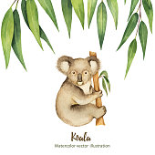 Watercolor vector green floral card with eucalyptus leaves and Koala isolated on white background. Cute illustration design children books, zoo and posters.
