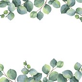 Watercolor vector green floral card with eucalyptus leaves and branches isolated on white background. Healing Herbs for cards, wedding invitation, posters, save the date or greeting design.