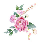 Watercolor vector hand painting illustration of peony flowers and green leaves. Spring or summer flowers for invitation, wedding or greeting cards.