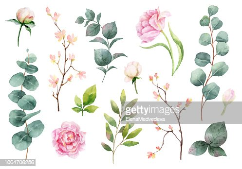 Watercolor vector hand painting set of peony flowers and green leaves. : stock vector