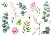 Watercolor vector hand painting set of peony flowers and green leaves. Spring or summer flowers for invitation, wedding or greeting cards.