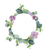 Watercolor vector hand painted round wreath with eucalyptus and flowers of saffron. Healing Herbs for cards, wedding invitation, posters, save the date or greeting design.