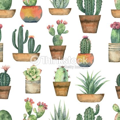 Watercolor vector seamless pattern of cacti and succulent plants isolated on white background. : stock vector